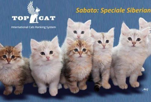 expo felina san genesio afef 2017