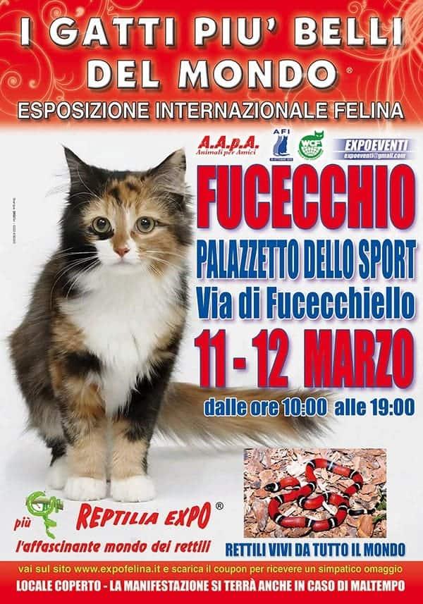 Expo felina Fucecchio 2017