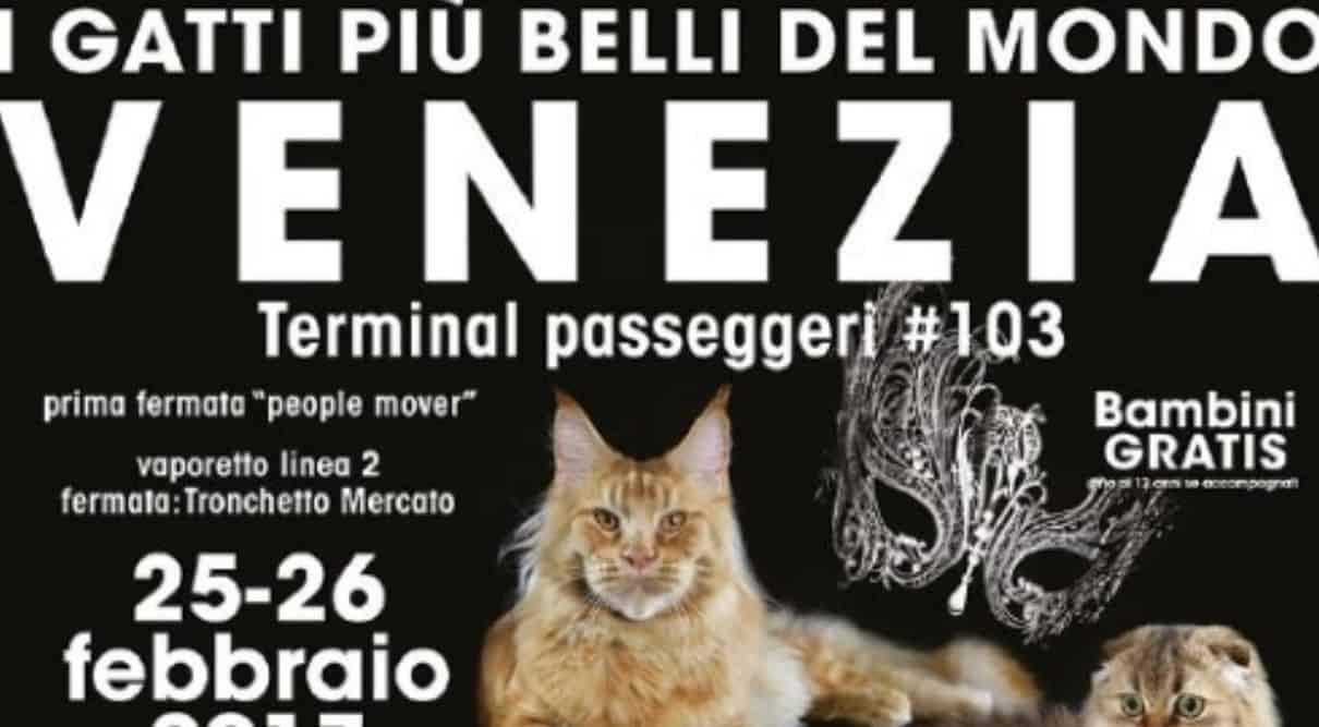 Expo felina di Venezia 2017
