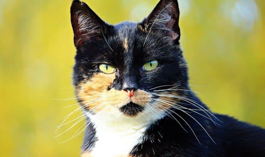 Il carattere del gatto e psicologia