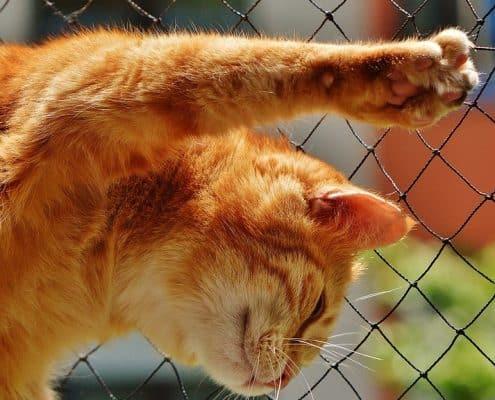 Carattere gatto rosso