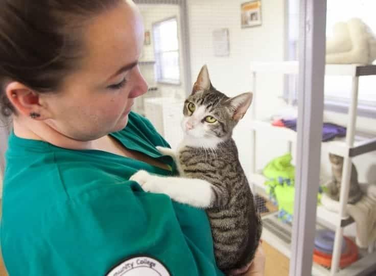 Gatto e pet therapy