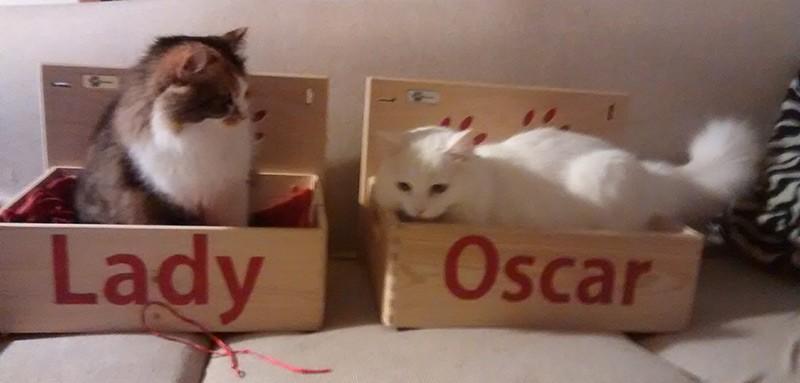 Lady e Oscar nella cuccia athleticat