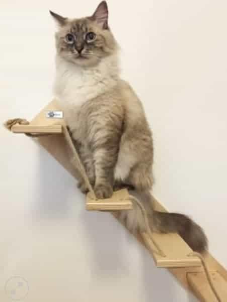 Costruire Una Casa In Legno : Scale percorsi e mensole per gatti arricchimento