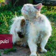 Gli anti pulci e antiparassitari per gatti