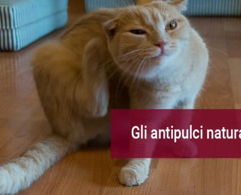 Antiparassitari naturali per gatti