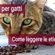 cibo per gatti come leggere le etichette
