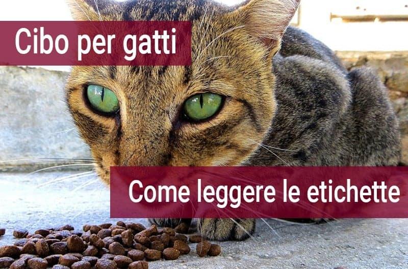 Cibo Per Gatti Leggere Le Etichette Miciogattoit