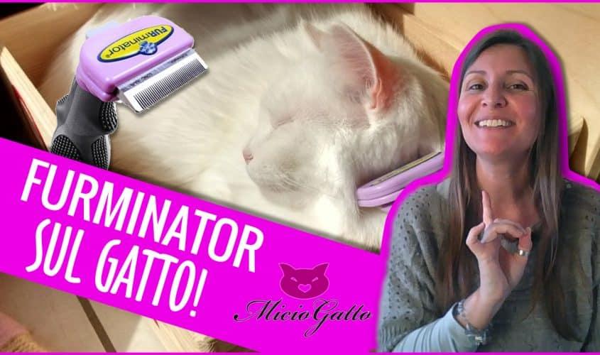 Furminator per gatto recensione