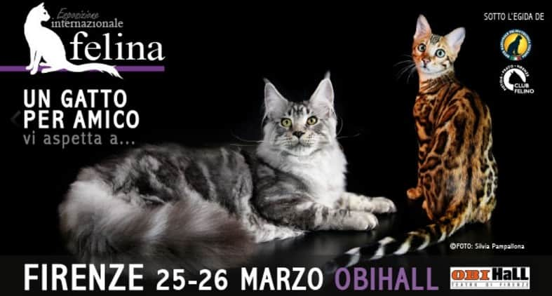 expo felina di firenze enfi 2017 - miciogatto.it - Toilette Per Gatti Firenze
