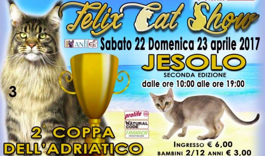 felix cat show jesolo 2017
