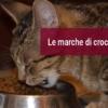 Le migliori marche di crocchette per gatti