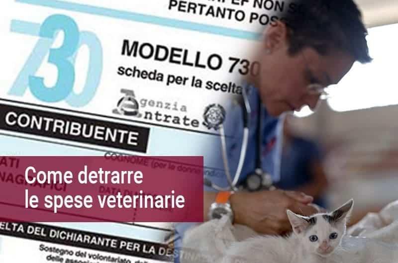 Spese veterinarie detraibili nel 730 2017 ecco come fare for Spese deducibili 730
