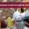Alimentazione casalinga corretta del gatto