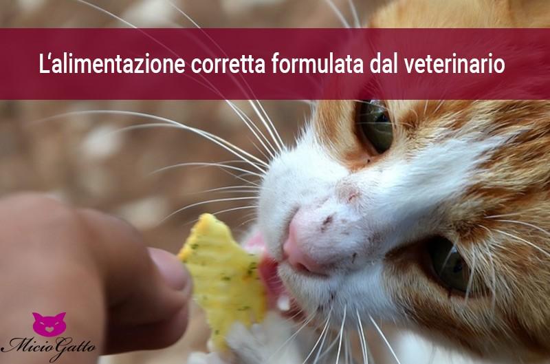 alimentazione casalinga del gatto la formula del