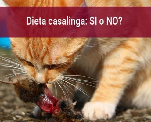 Cibi per gatto fatti in casa ricette