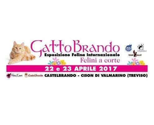 Expo felina agi castelbrando 2017