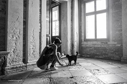 Incontro con il gatto Venezia MicioGatto