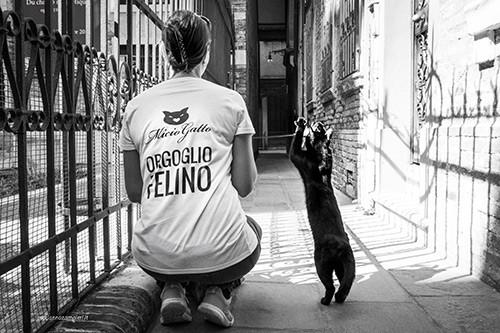 Orgoglio felino MicioGatto Venezia