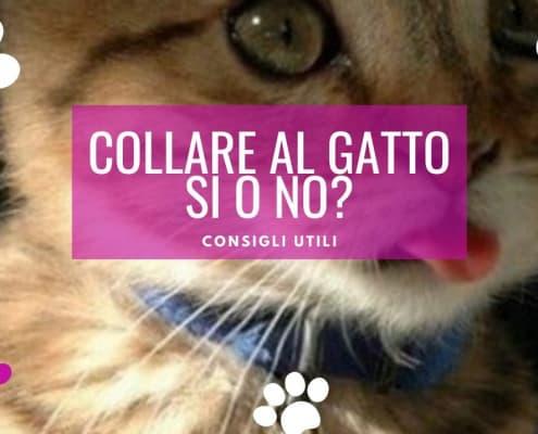 collare al gatto consigli