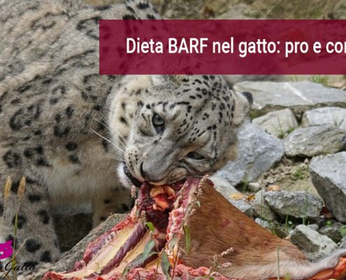 Dieta barf per gatto opinioni