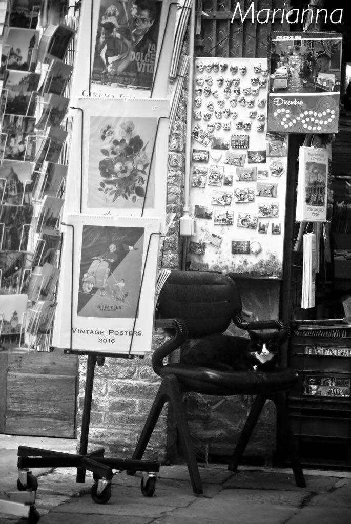 L'entrata della libreria Acqua Alta di Venezia, con il gatto - Foto di Marianna Zampieri