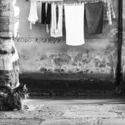 Gatti a Venezia Cats in Venice con Mariana Zampieri