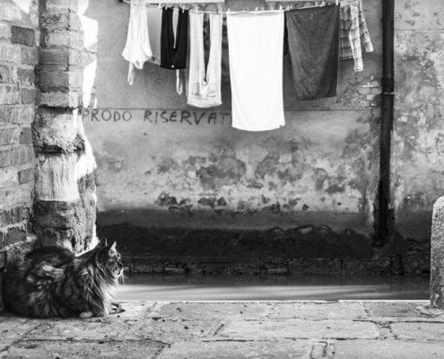 Gatti a Venezia Cats i nVenice con Mariana Zampieri