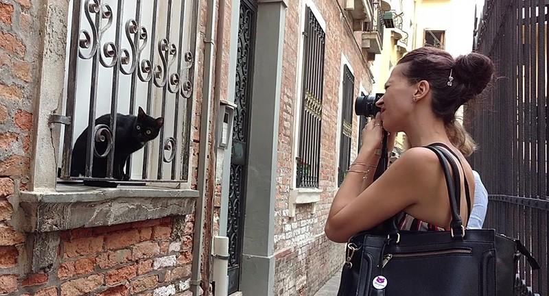 Gatti a Venezia cats in venice marianna zampieri