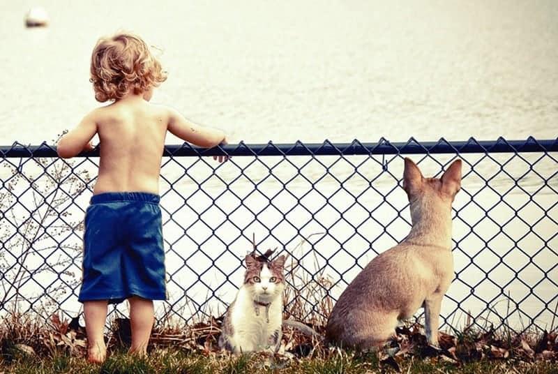 Gatti E Bambini Come Convivere Serenamente Miciogattoit
