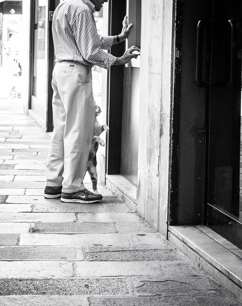 Un gatto di Venezia al bancomat - Foto di Marianna Zampieri