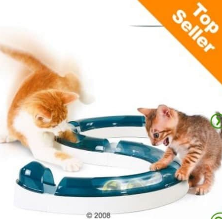 gioco intelligenza gatto