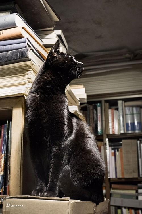 Libreria Acqua Alta Venezia Dominique - Foto di Marianna Zampieri