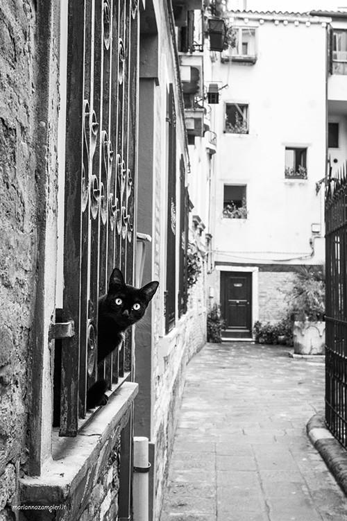 Mila gattina di Venezia - Foto di Marianna Zampieri