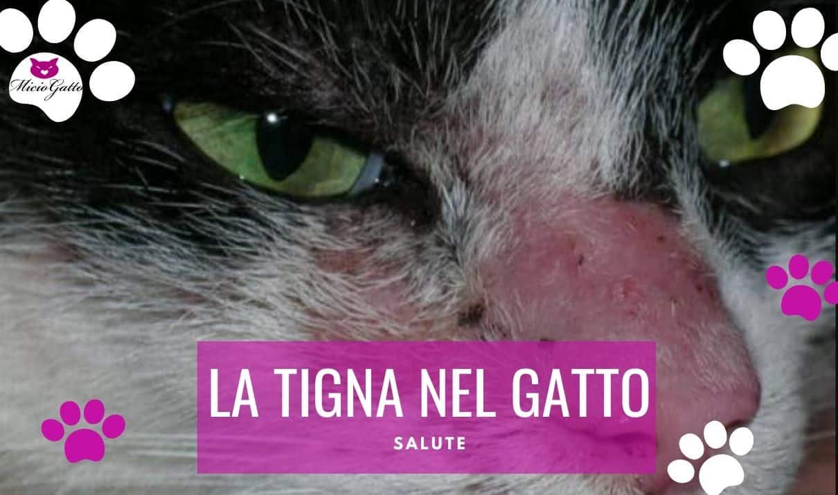 Una lesione da tigna nel gatto, in questo caso arrossata.