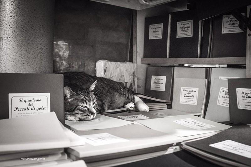 Tigre della Libreria Acqua Alta - Foto di Marianna Zampieri