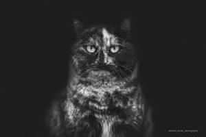 Sabrina Boem - Gli invisibili, i gatti delle colonie