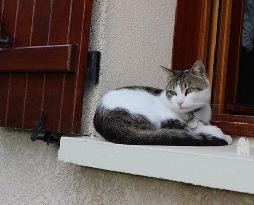 Case vacanza per gatti