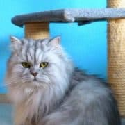 Educare il gatto al tiragraffi