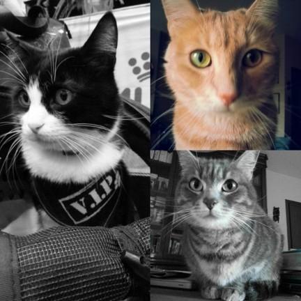 I gatti di Claire, Felix, Etolie e Twister