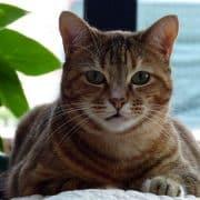 Omeopatia veterinaria per gatti