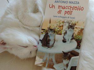 Storie commoventi di gatti