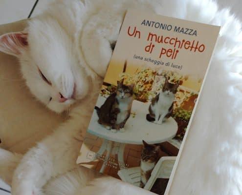 Un mucchietto di peli di Antonio Mazza