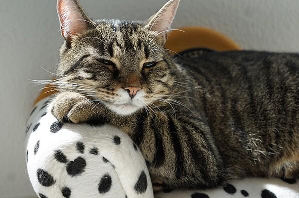 8 agosto giornata internazionale del gatto