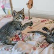 Come accogliere ed educare un gattino tutti i consigli