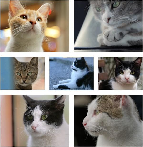 Cast del documentario Kedi sui gatti di Istanbul