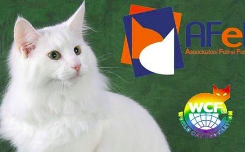 expo felina di vanzaghello milano 2017 afef
