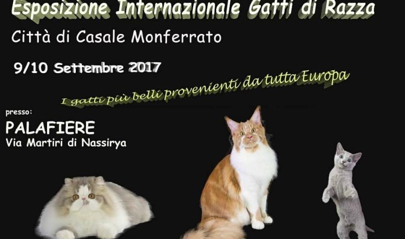 expo felina casale monferrato