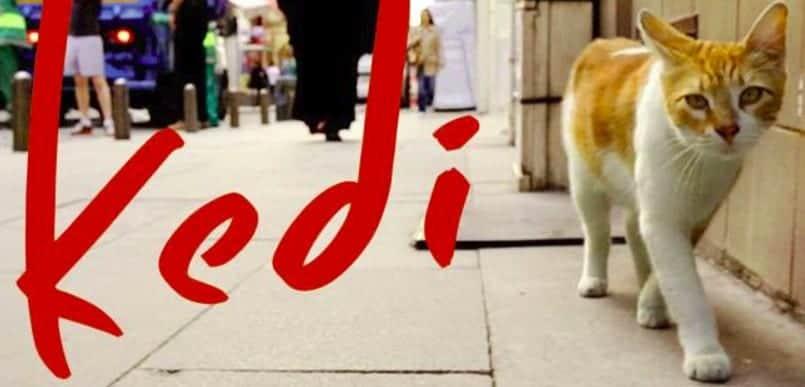 Risultati immagini per â??Kedi. La città dei gattiâ??