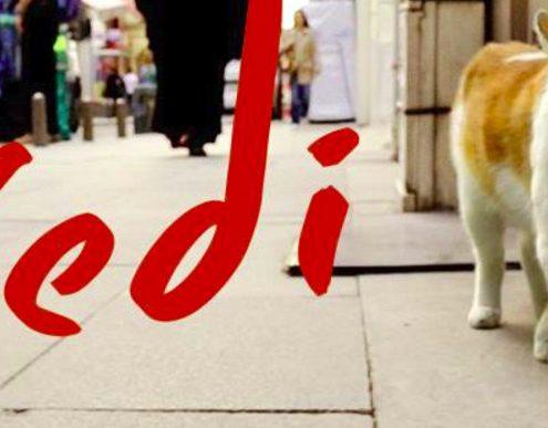 kedi: film docuementario sui gatti di Istanbul